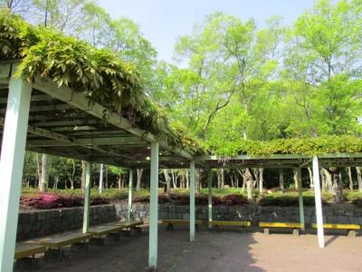 番の州公園開花情報(4/23)