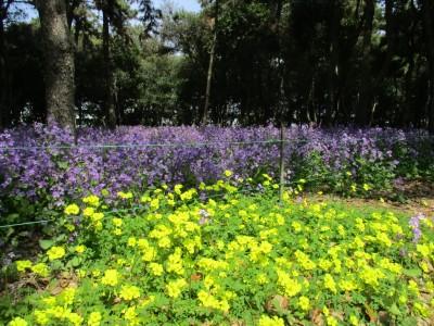 番の州公園開花状況(3/29)